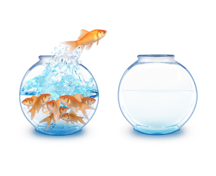 Gold Fish Jumping Empty Bowl