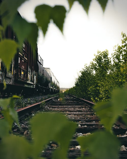 Train Through Trees